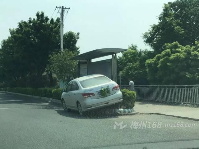 梅州大桥附近一小车发生事故,车牌竟然被树枝遮挡了